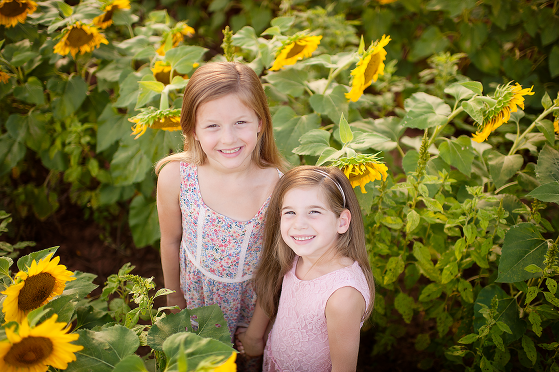sunflower pictures in charlotte nc monica ebert photography